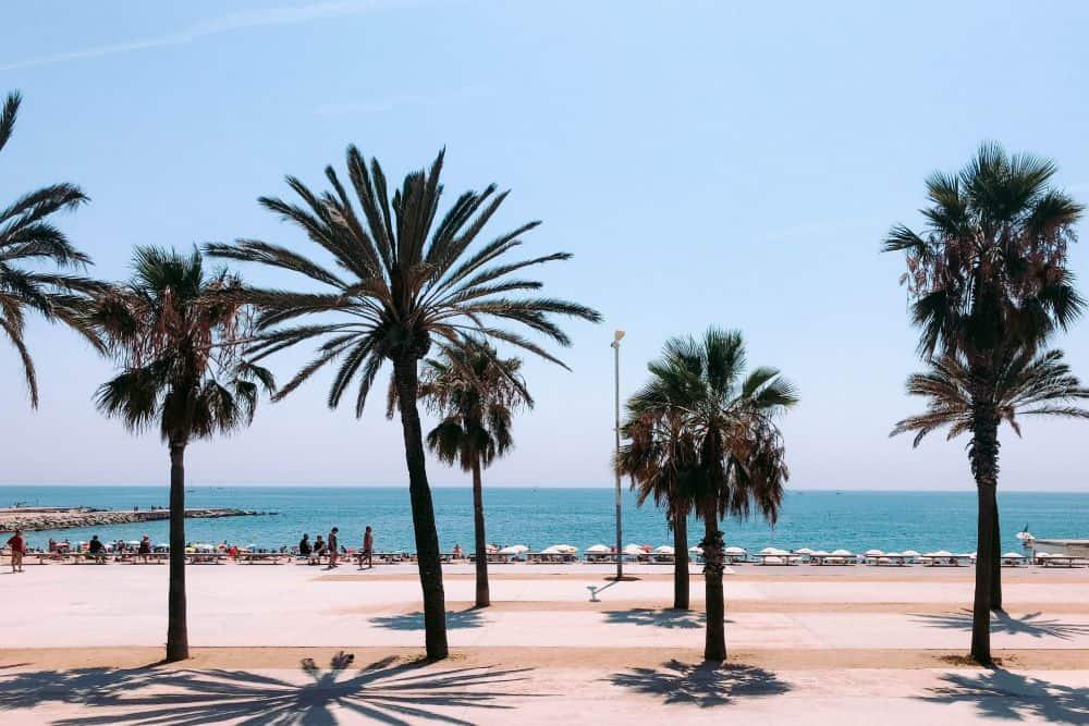 barcelona palmen